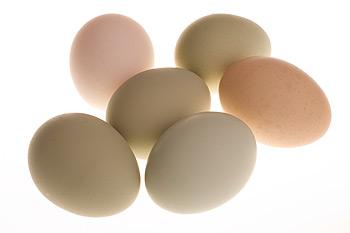 Диета: яйцо и грейпфрут